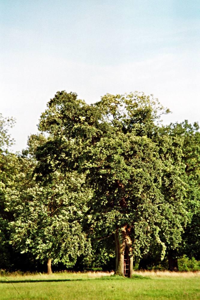 Jenischpark II