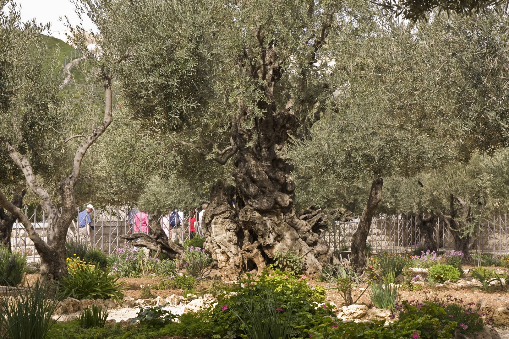 Jerusalem Garten Gethsemane