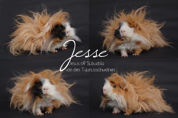 Jesse - Jesus of Suburbia von den Taunusschweinchen