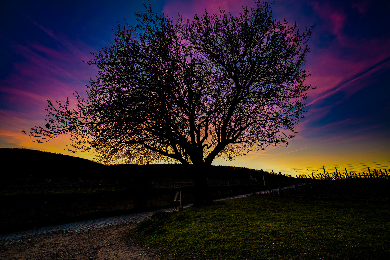 Jesuitenmandel_Sonnenuntergang