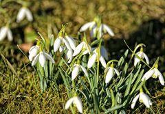 Jetzt aber mache hine ... Frühling