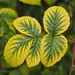 Jetzt färbt Künstlerin Natur wieder ihre Blätter!