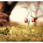 Jetzt geht er aber los, der Frühling!