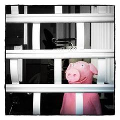 jetzt haben sie das Schwein....