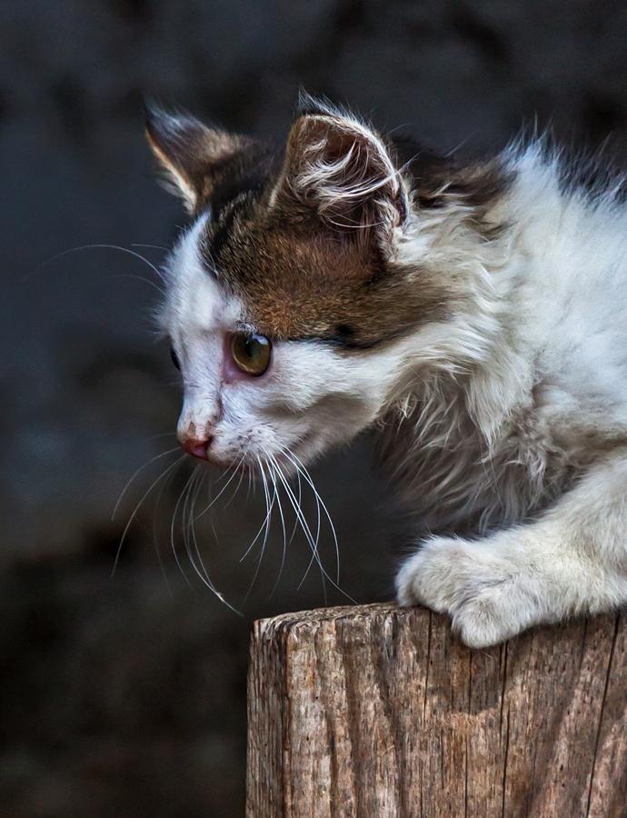 Jetzt hat die Katze was entdeckt!