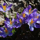 Jetzt ist der Frühling da...