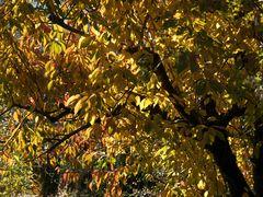 Jetzt ist der Herbst auch im Gartene angekommen