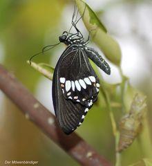 Jetzt müssen nur noch die Flügel aushärten , dann up,up and away