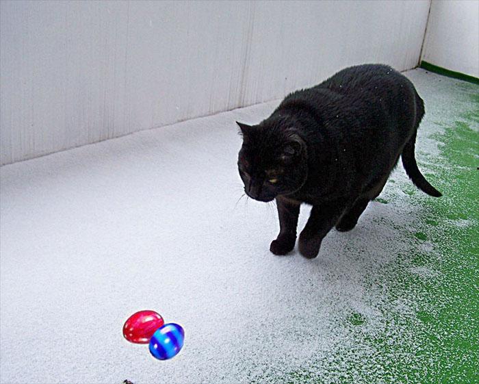 Jetzt muß ich die Eier auch noch im Schnee suchen