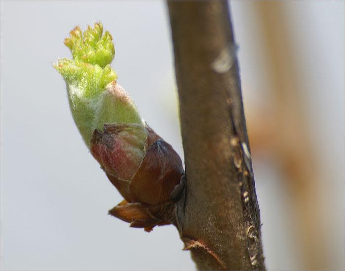 jetzt startet der Frühling