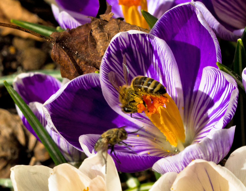 Jetzt wirds Frühling!!