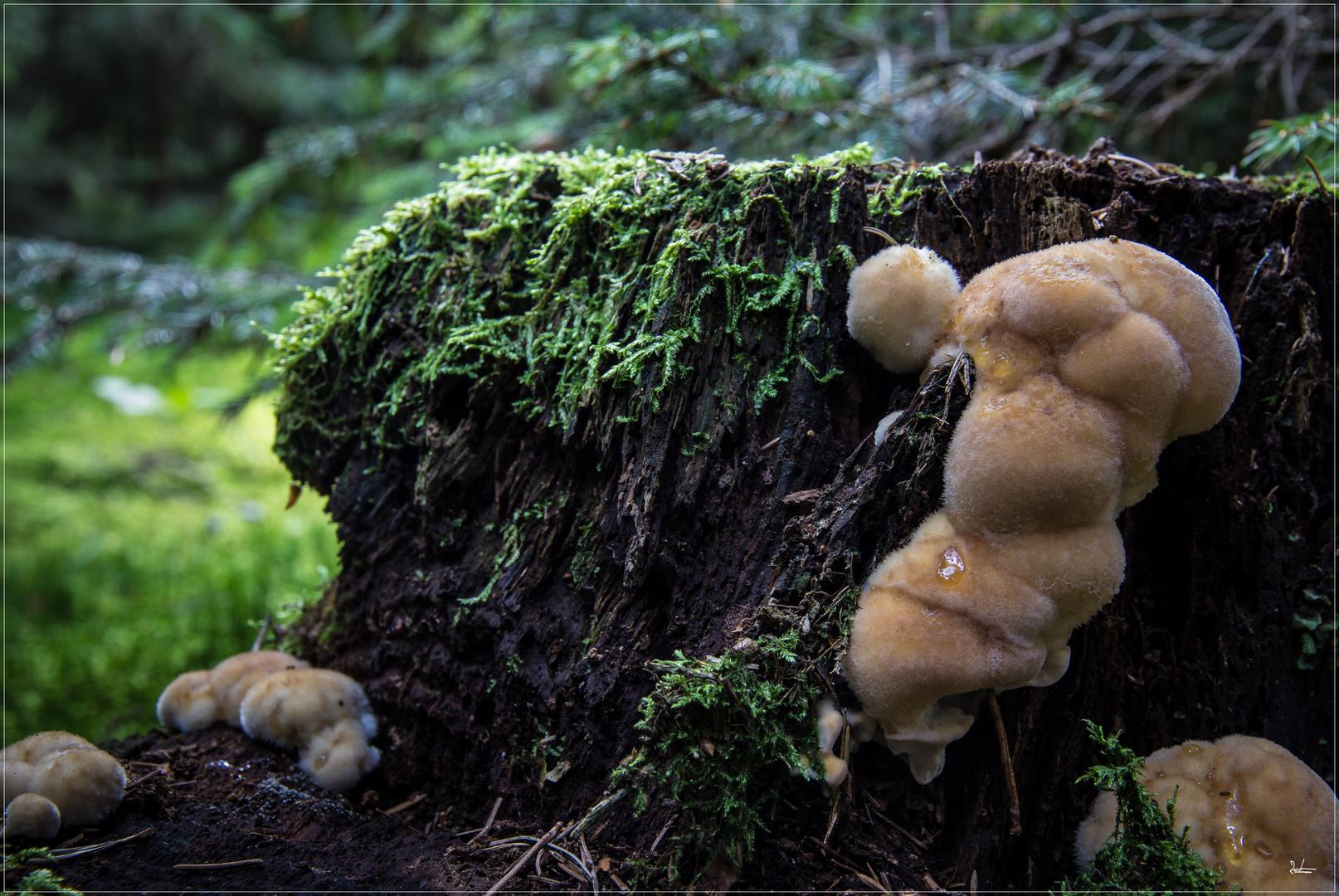 Jetzt wird´s im Wald gemütlich.