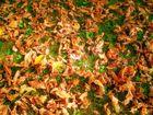 Jetzt wirds wirklich Herbst