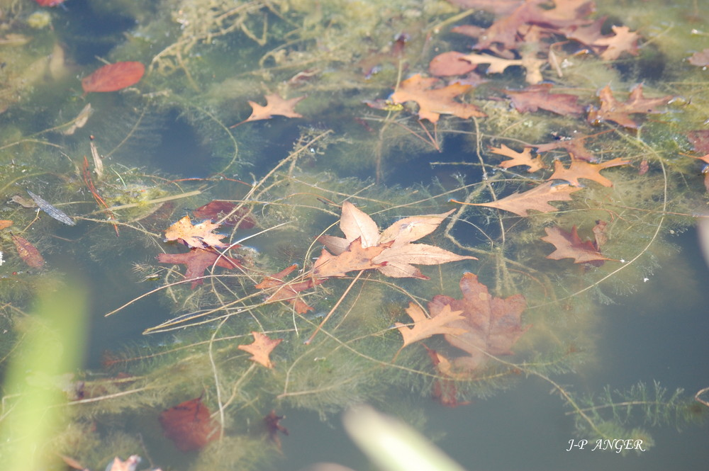 Jeu d'eau et de feuilles
