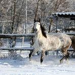 Jiipiieee, Spaß am Schnee