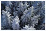 Jippie yeah-yeah-yeah, es ist Winter.