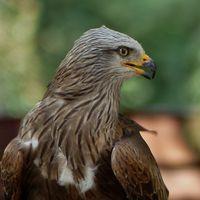 Joachim Braun - Birdfriend