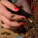 Johanna - Auch die Bienen beweisen Mut