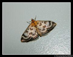 joli papillion doré