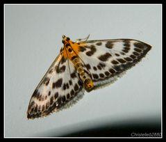 joli papillon doré2