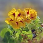 Joli Prénom fleuri