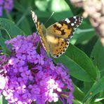 Jolie petit papillon!!!