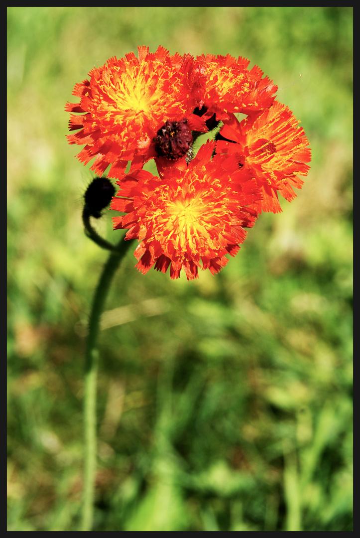 Jolie petite fleur