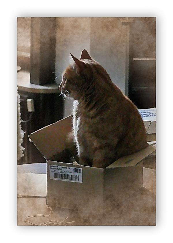 Jon (Johanniskraut) hat gemerkt, dass vieles verpackt wird ... und er will auch mit