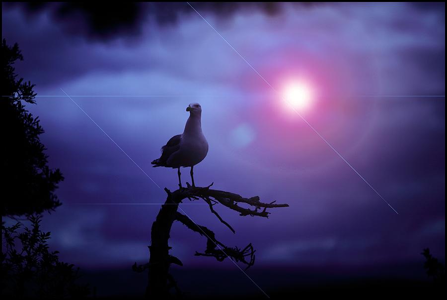 Jonathan's twilight