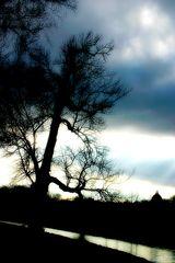 Joshua Tree...