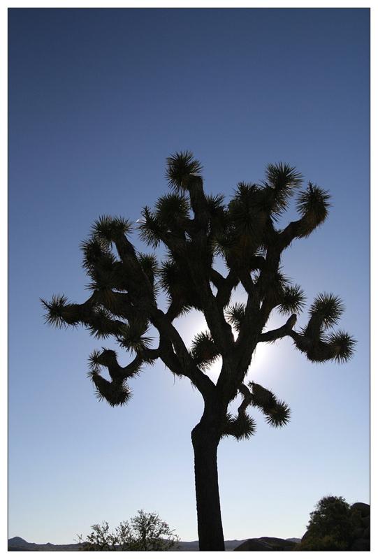 Joshua Tree NP - Lichtspiele II