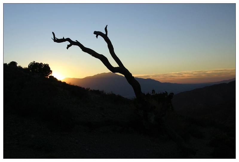 Joshua Tree NP - Sunset I