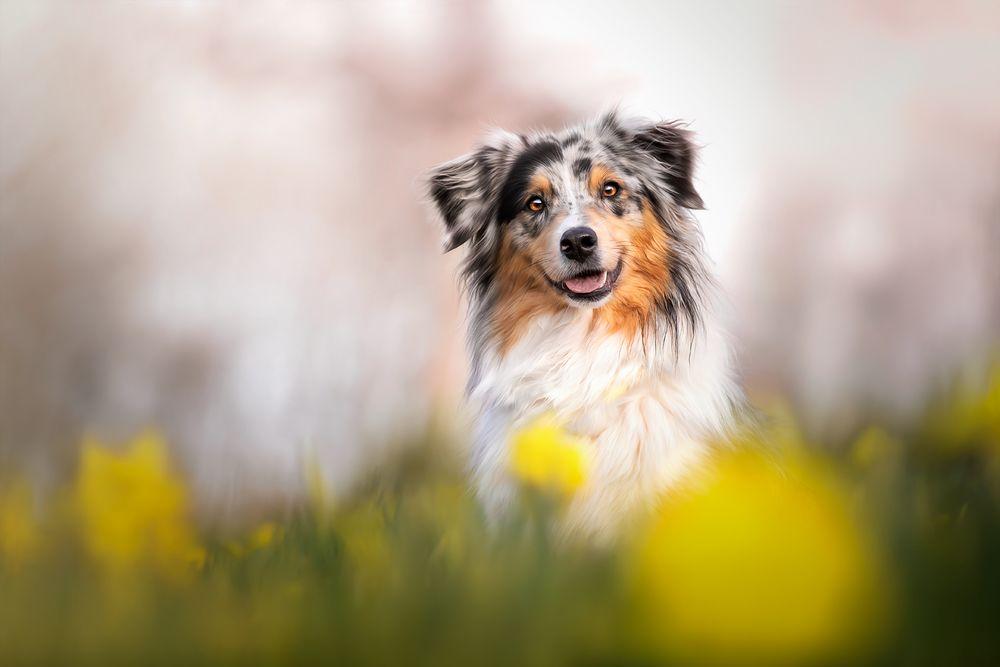 Josie im Frühling