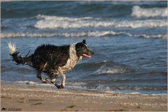 .. Joy am Strand ..