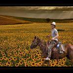 joy riding in yellow field...