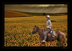 joy riding in yellow field...