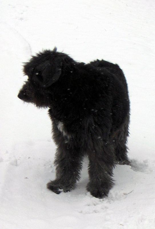 Juchu - überall Schnee!