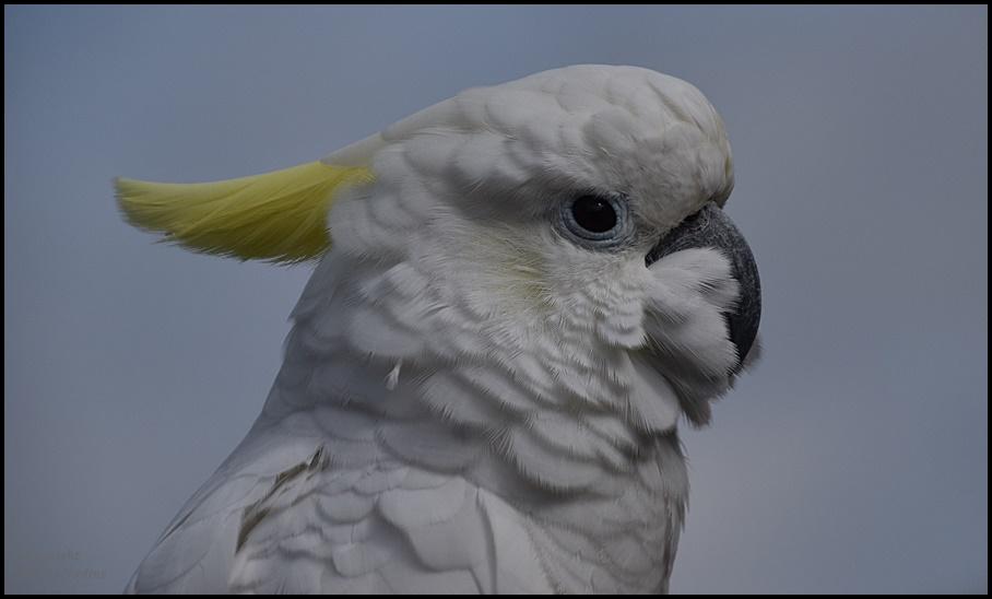 Juchu...ein Kakadu !!!