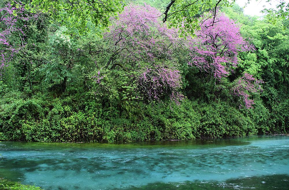 "judasbäume am syri i kalter (""blaues auge"")"