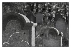 Jüdischer Friedhof #3