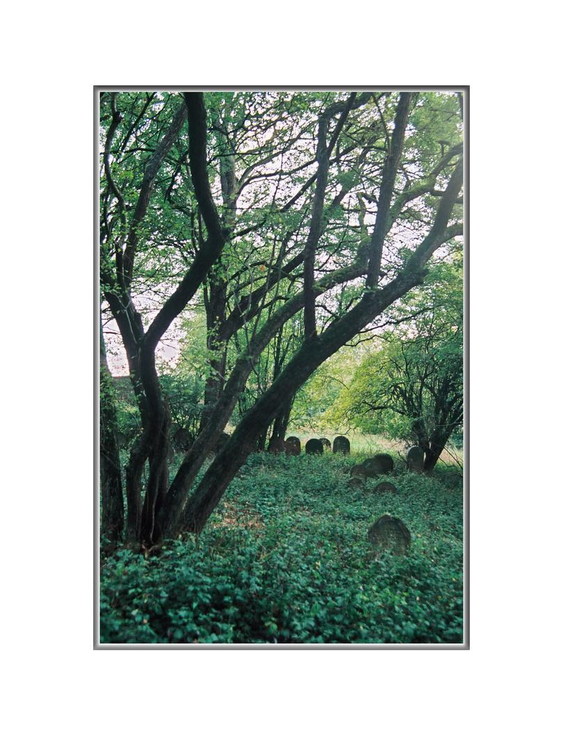 Jüdischer Friedhof in Allersheim