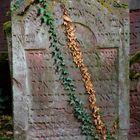 Jüdischer Friedhof in Frankfurt