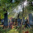 Jüdischer Friedhof (Wiener Zentralfriedhof)
