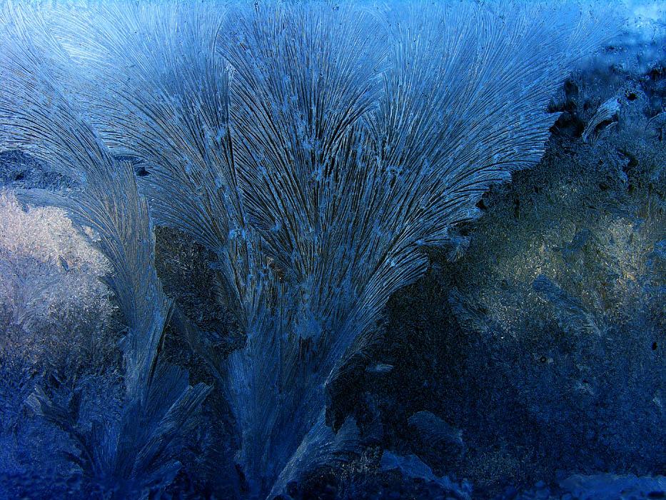 JUGENDSTIL - EISBLUMEN -  GRAVUR - oder: Ausbruch aus der Kälte, erstarrt...
