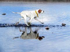 jugueteando en el agua