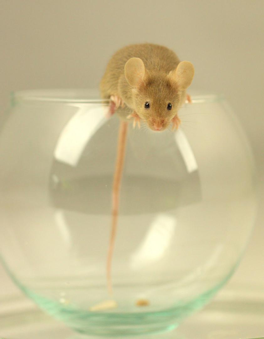 Julia unsere Maus
