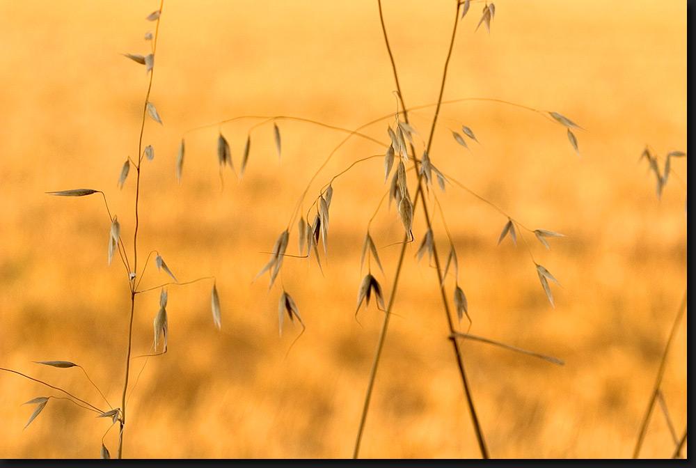 Juligräser