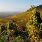 Julius Echter-Weinanbaugebiet am Schwanberg bei Iphofen