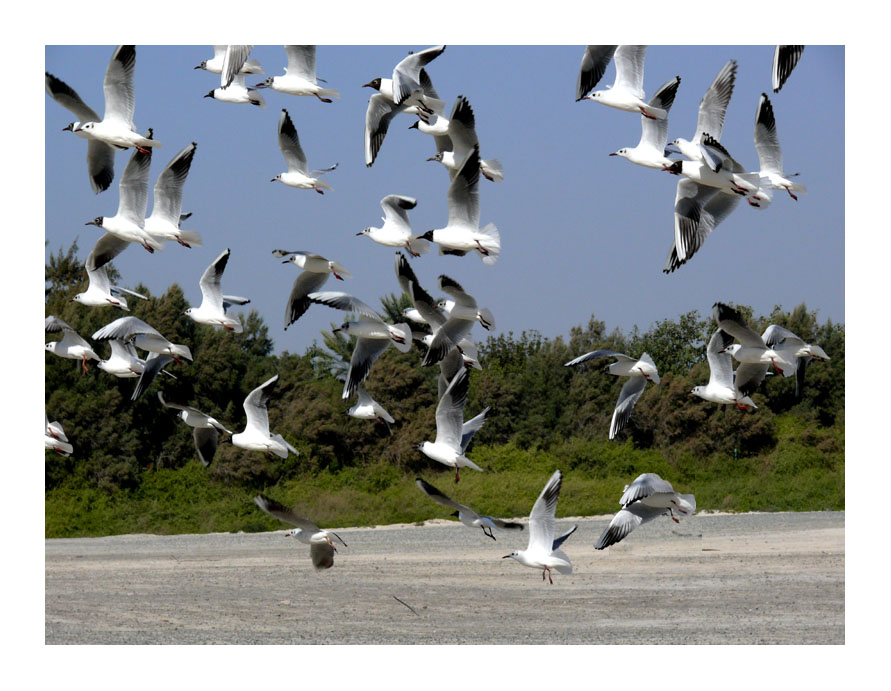 Jumeirah birds