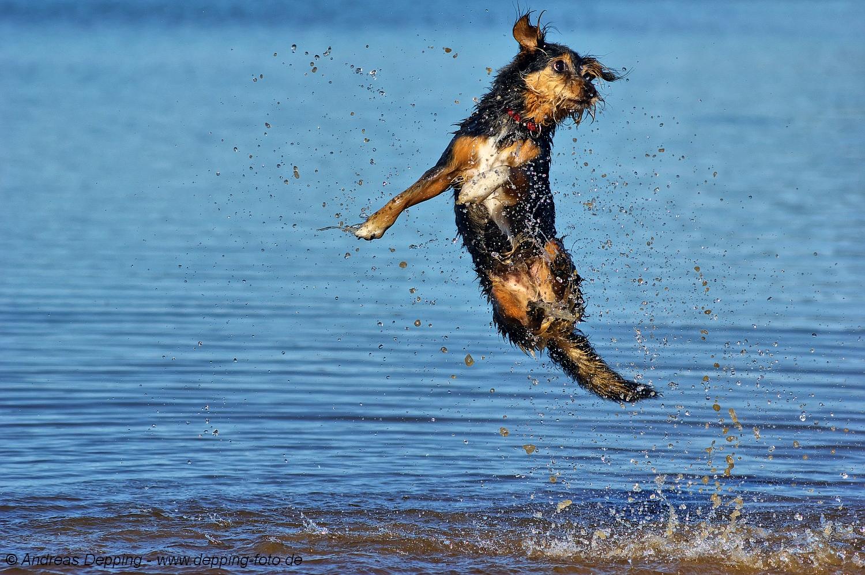 """""""JUMP!"""""""